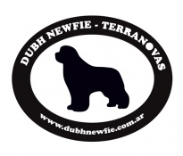 Dubh Newfie